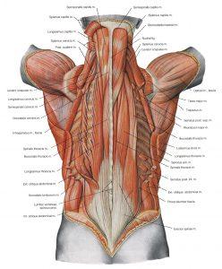 ryggmuskler-ryttare