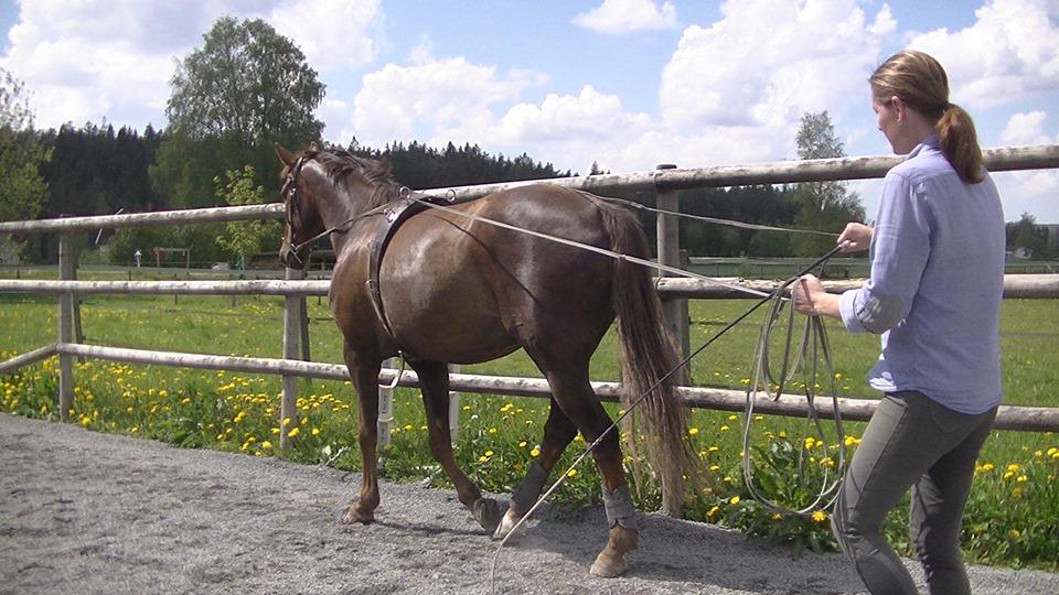 sådan häst har ledproblem