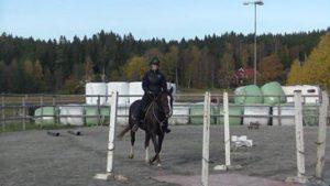 logisk-ridning-ponny